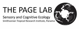 PAGE LAB